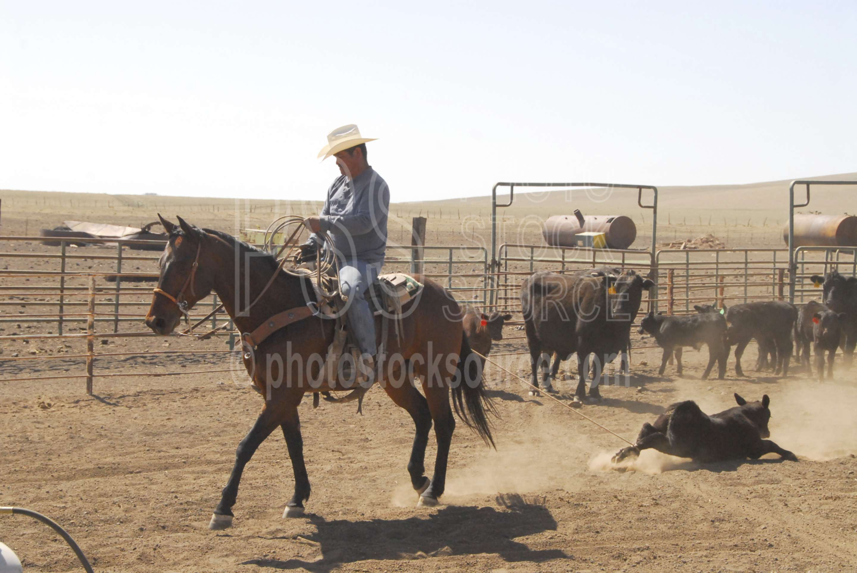 Cowboy Roping Quotes Quotesgram