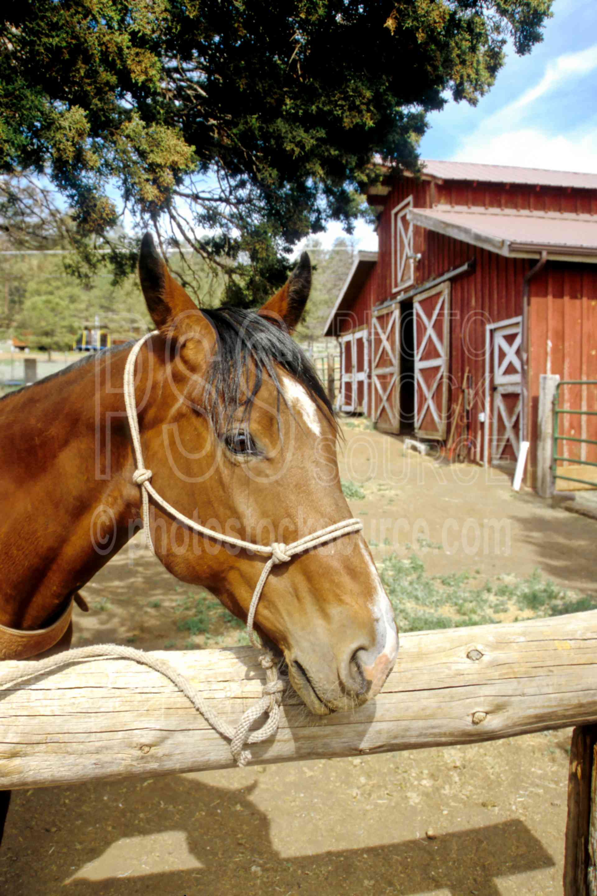 Photo of Lucky the Horse by Photo Stock Source cowboy