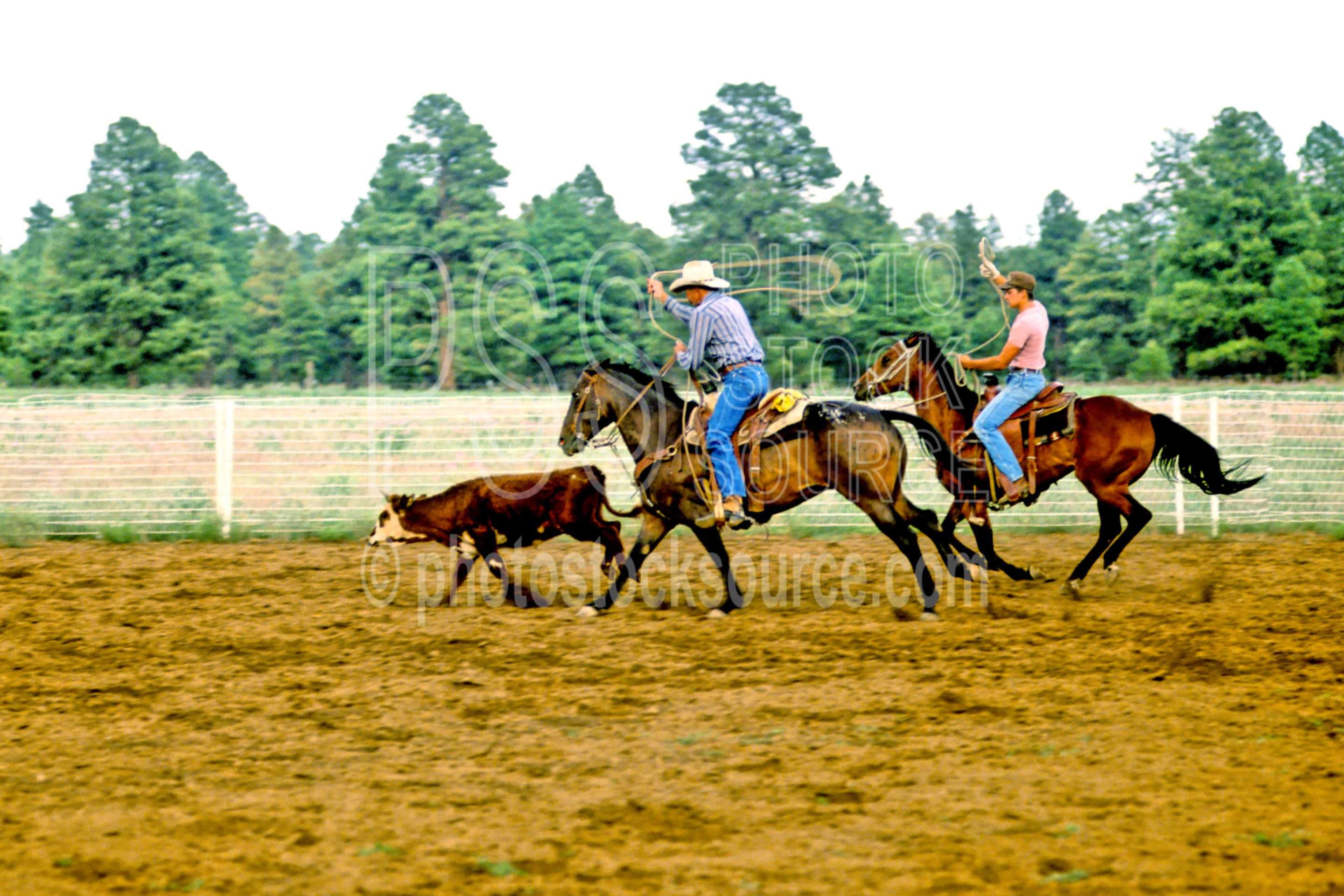Cowboy Roping,cattle,cows,cowboy,horse,ranch,roping,team roping,usas