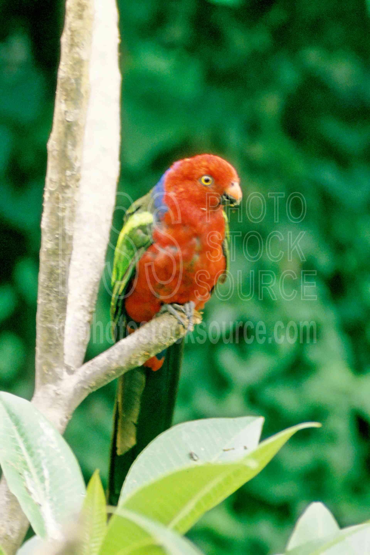 Parrot,bird,color,birds,lorikeets,jungle,bright,colors,animals
