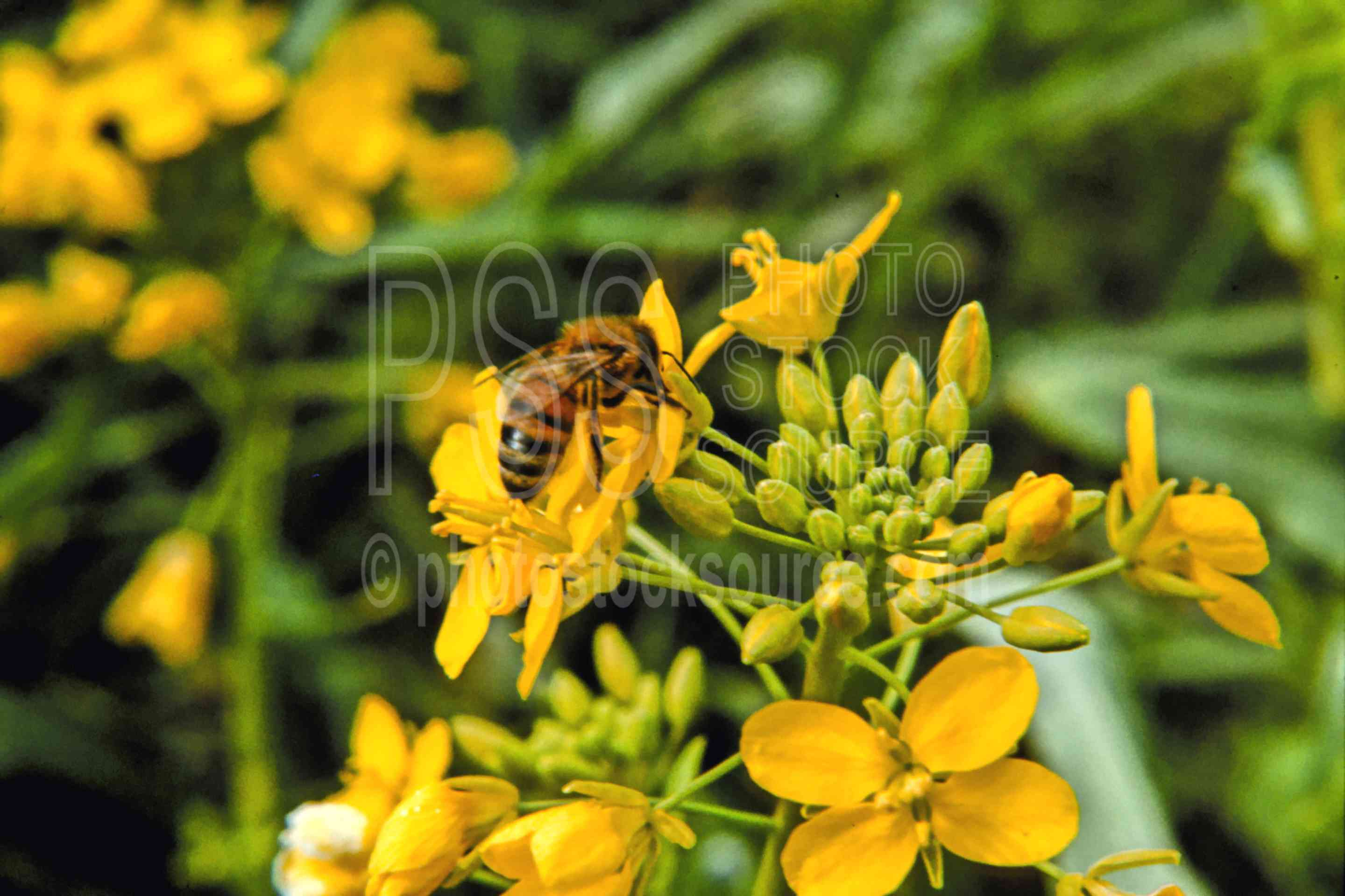 Bee on Flower,bees,blossom,flower,plant,spring,animals,plants