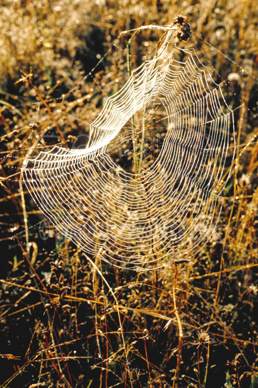 Spider Web,garden spider,webs,bugs,usas,animals