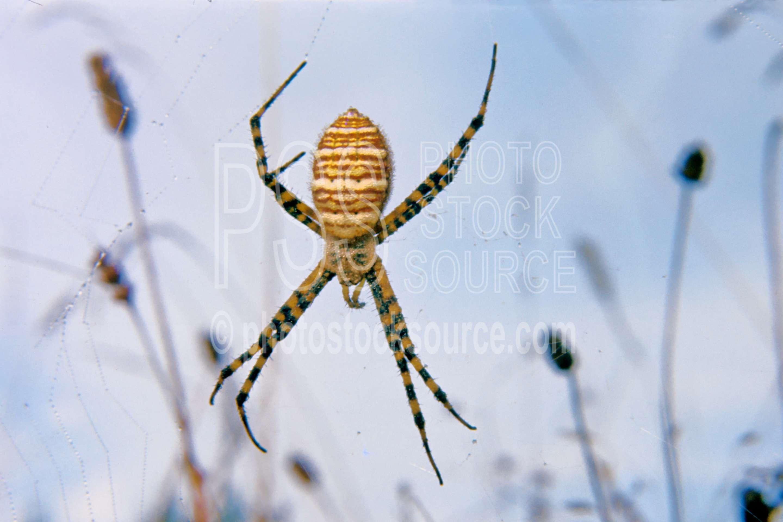 Garden Spider,webs,spider web,spider,bugs,usas,animals
