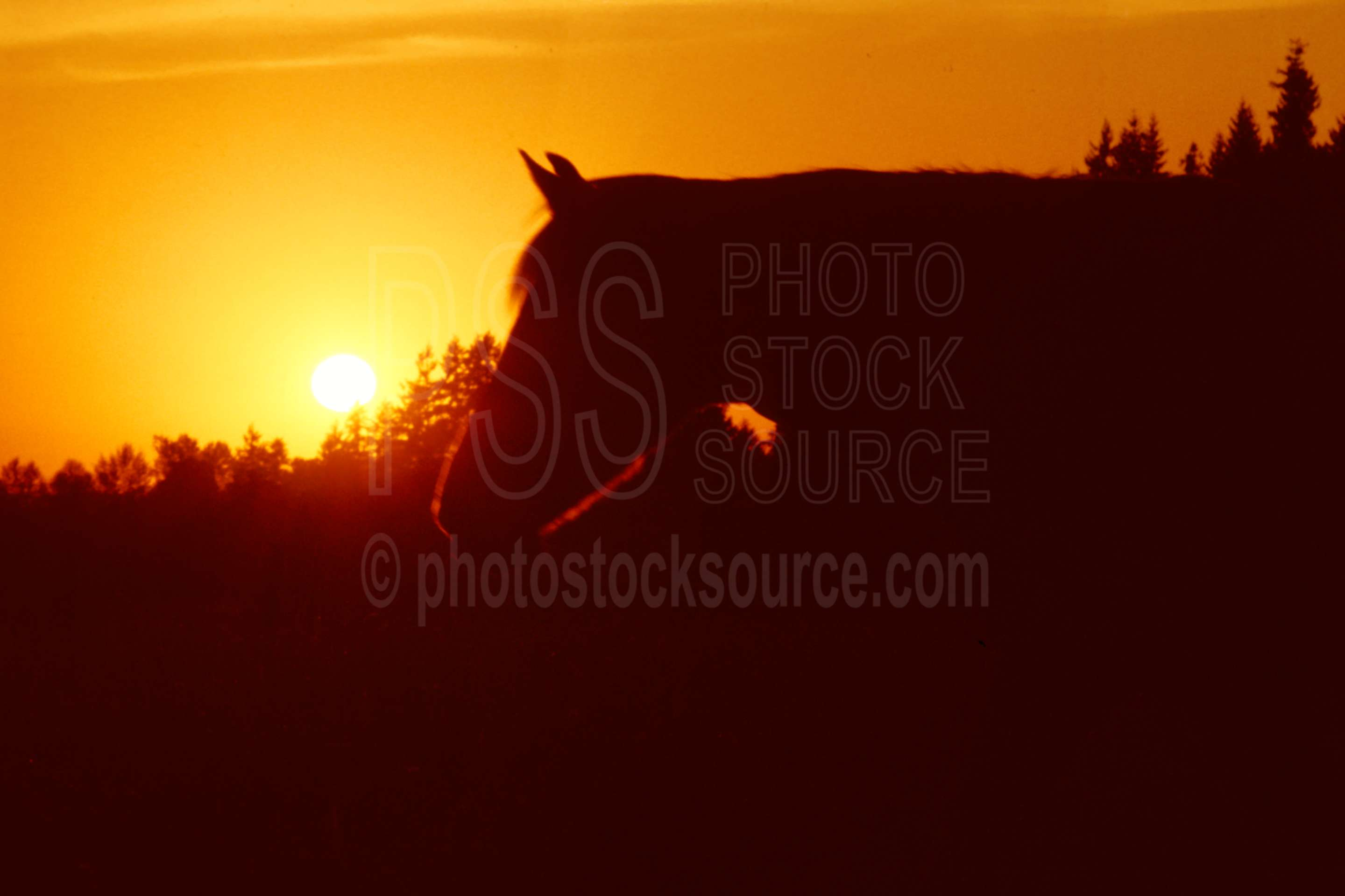 Horse and Sunset,horse,sunset,usas,animals,farms