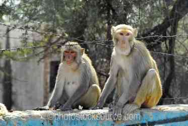 Photo of Macaques on a Wall