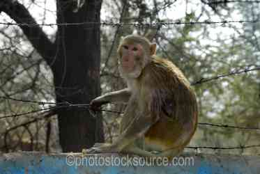 Photo of Macaque on a Wall