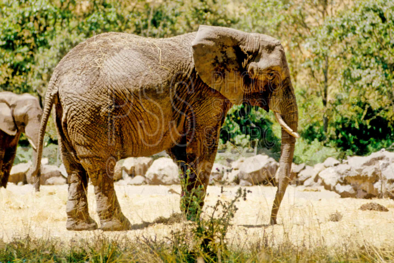 Elephant,usas,animals
