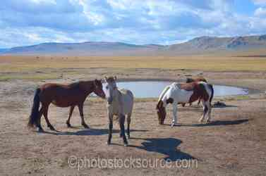 Horses at Watering Hole