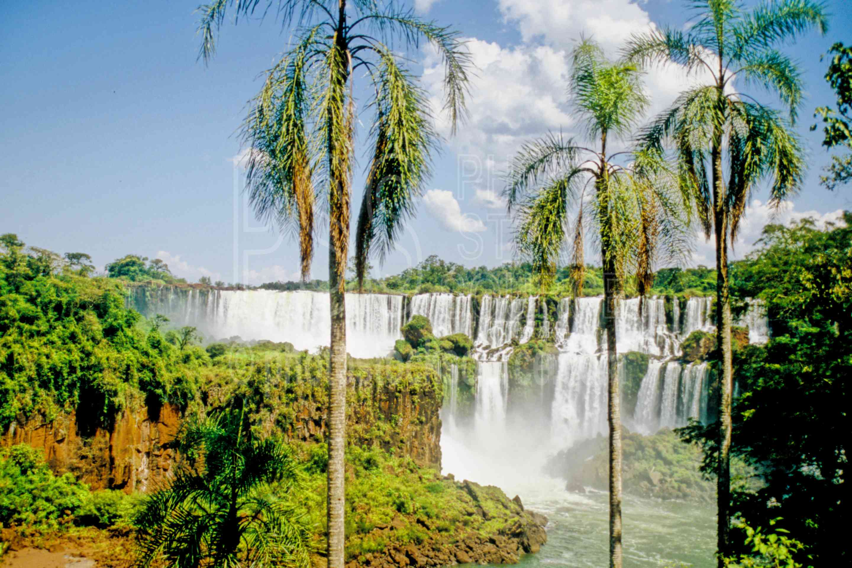 Salto San Martin,lower circuit,palm,palm tree,nature,waterfalls