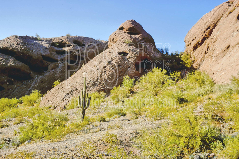 Saguaro Cactus,cactus,papago butte,papago park,plant,desert,usas,saguaro,nature,landscapes,plants