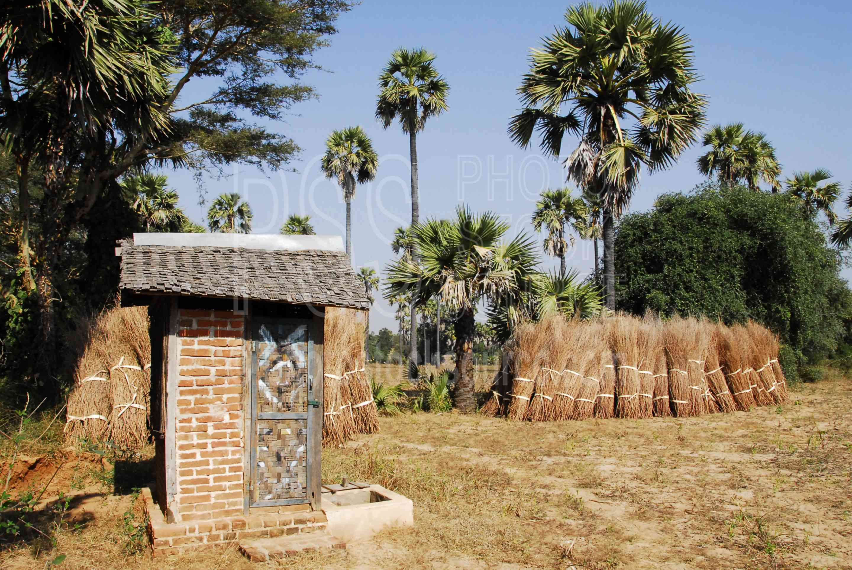 Outhouse and Palm Trees,myanmar,bathroom,outhouse,privy