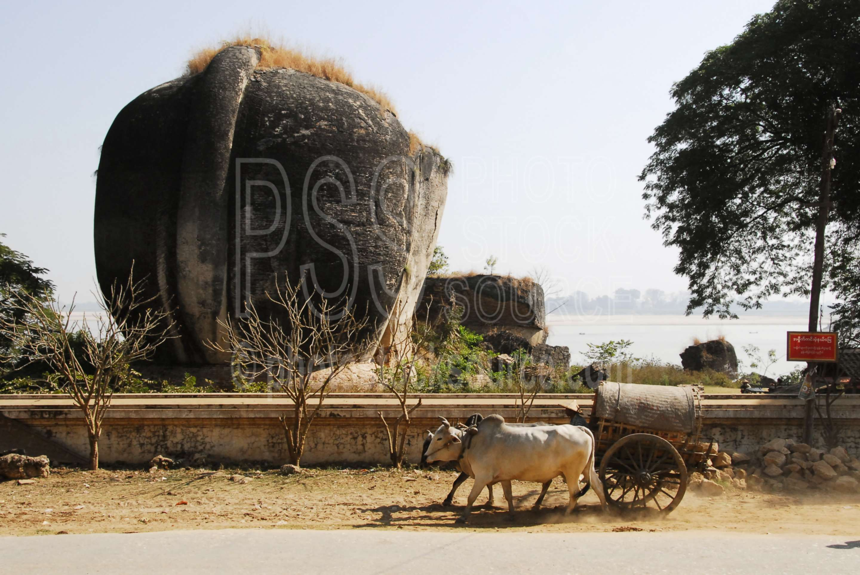 Ox Cart at Mingun Pagoda,myanmar,temple,ruin,lion,ox cart,transportation,taxi,wagon,mantara gyi,mingun pahto