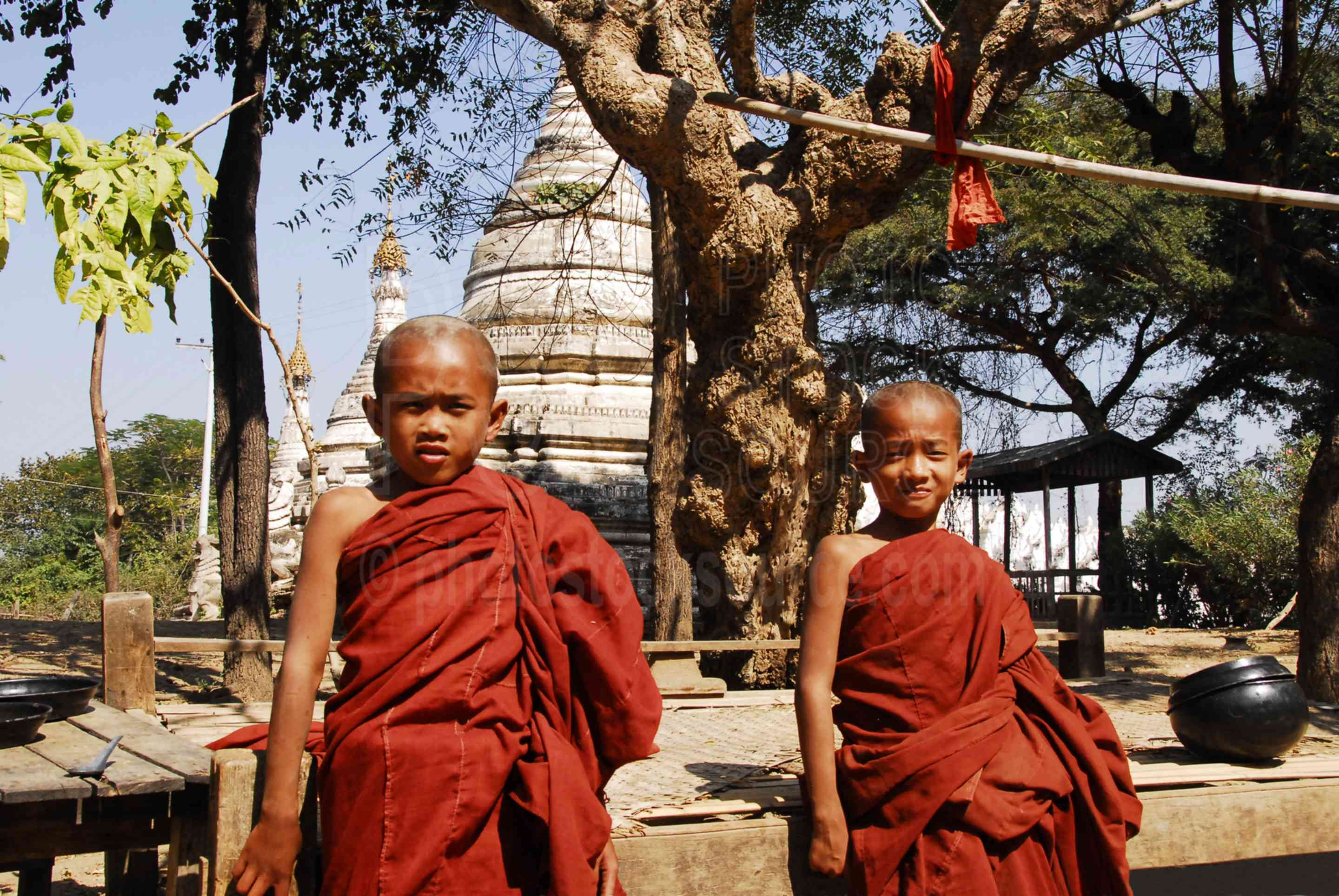 Young Monks,myanmar,people,monk,boy,red,robes,posing