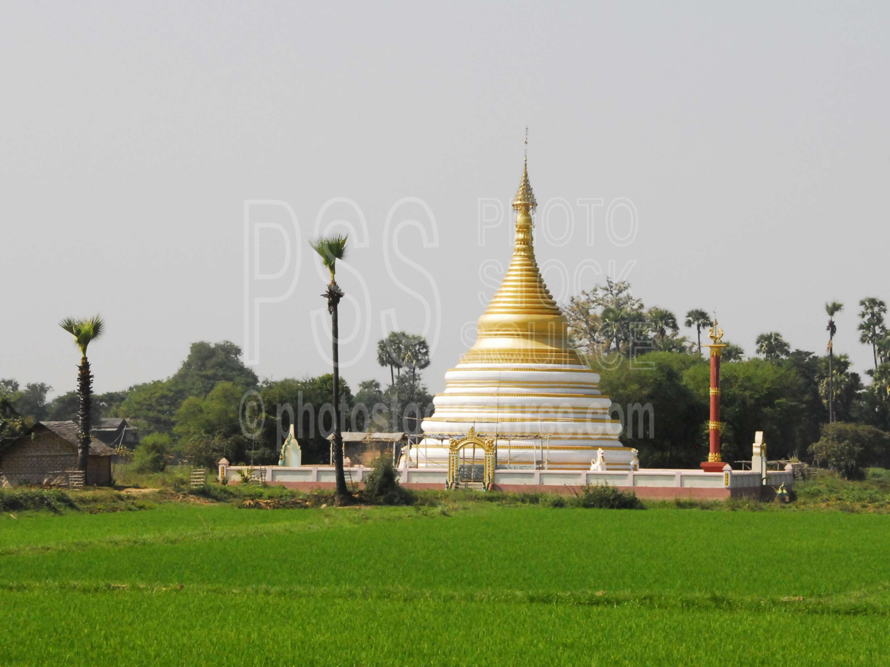 Rice Field Pagoda,myanmar,inwa,hathawaddy,ava,temple,rice,field,pagoda