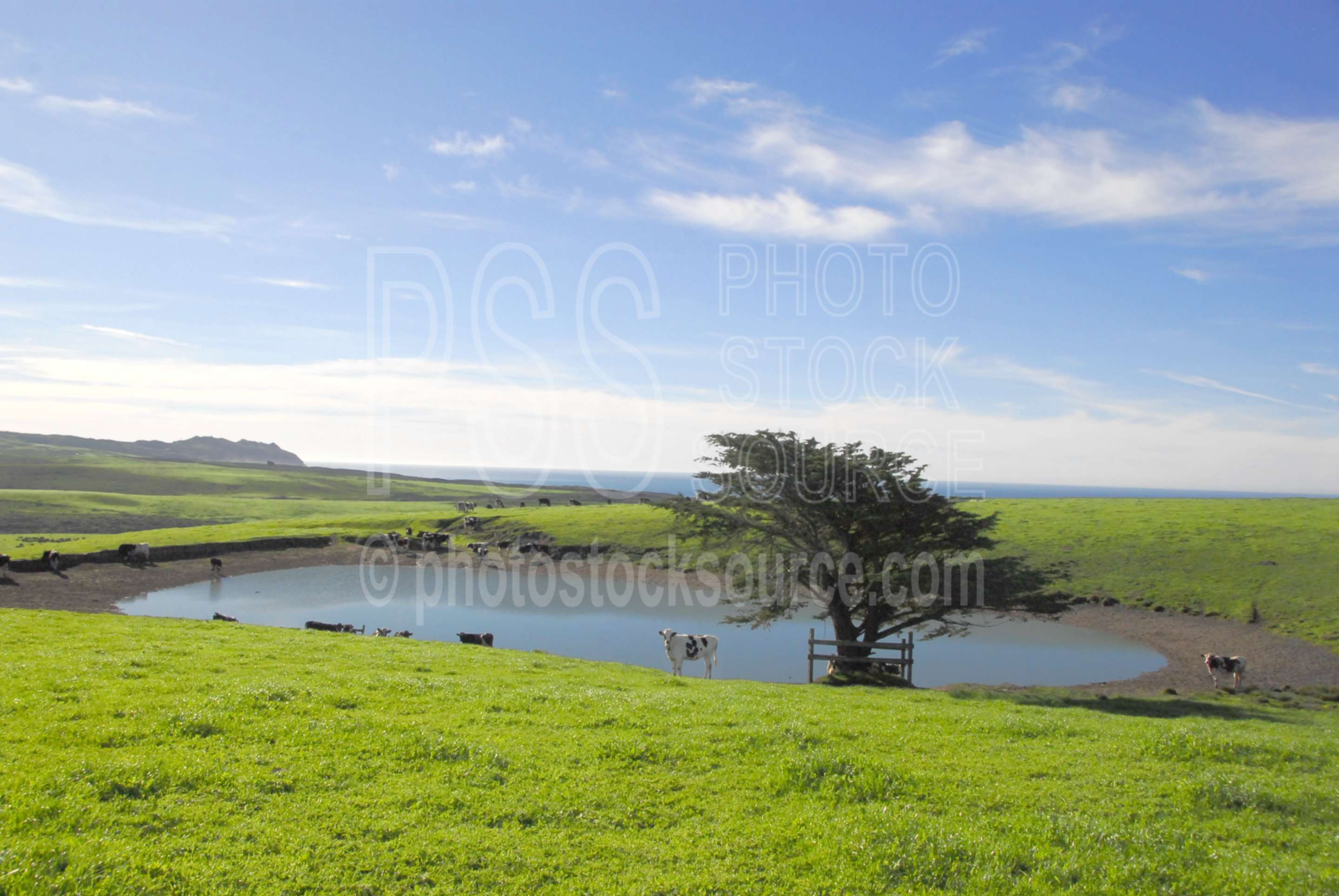 Point Reyes Water Hole,water hole,cattle,lake,pond,farms