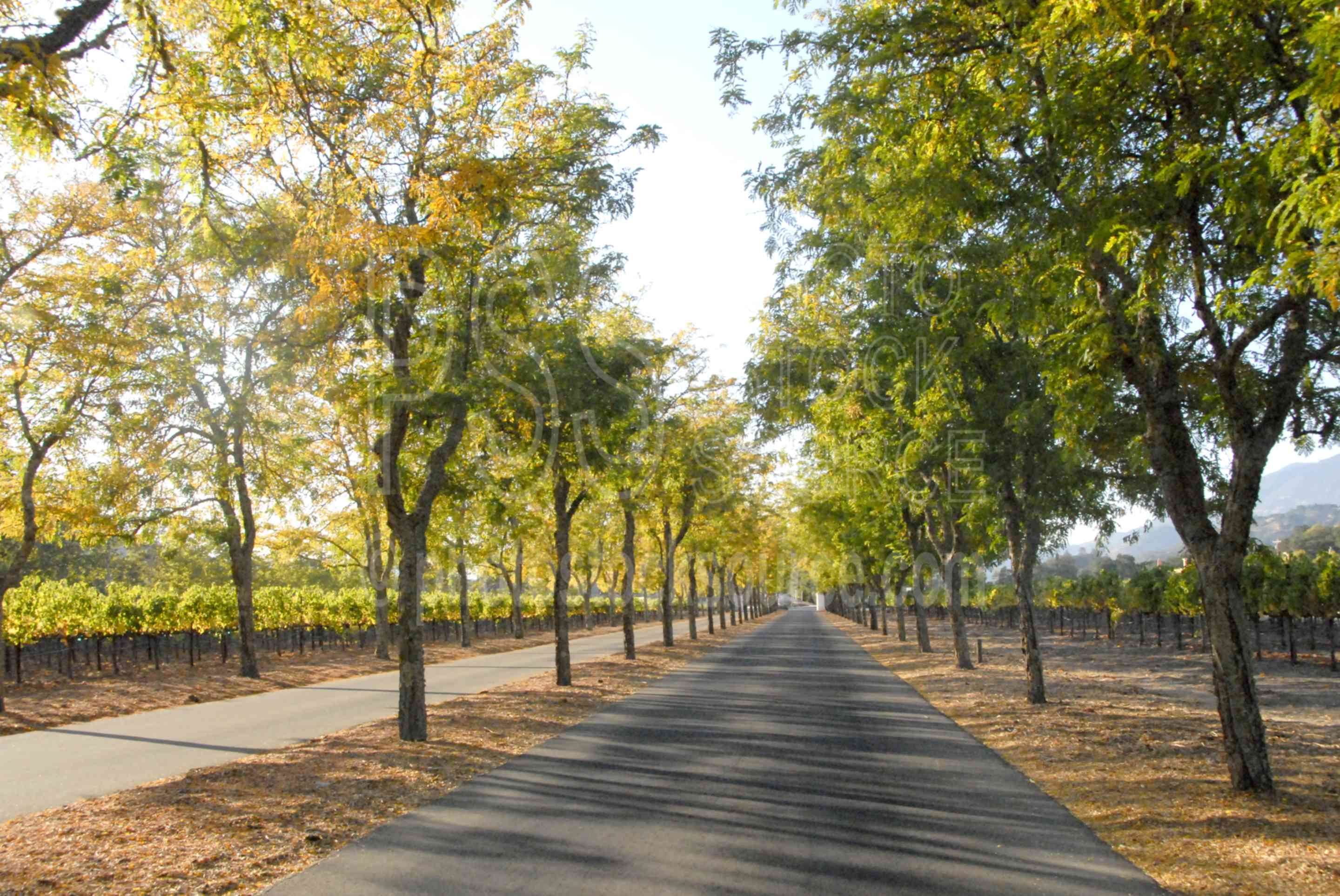 Sterling Vineyard Entrance,winery,vineyard,napa valley,lane,road