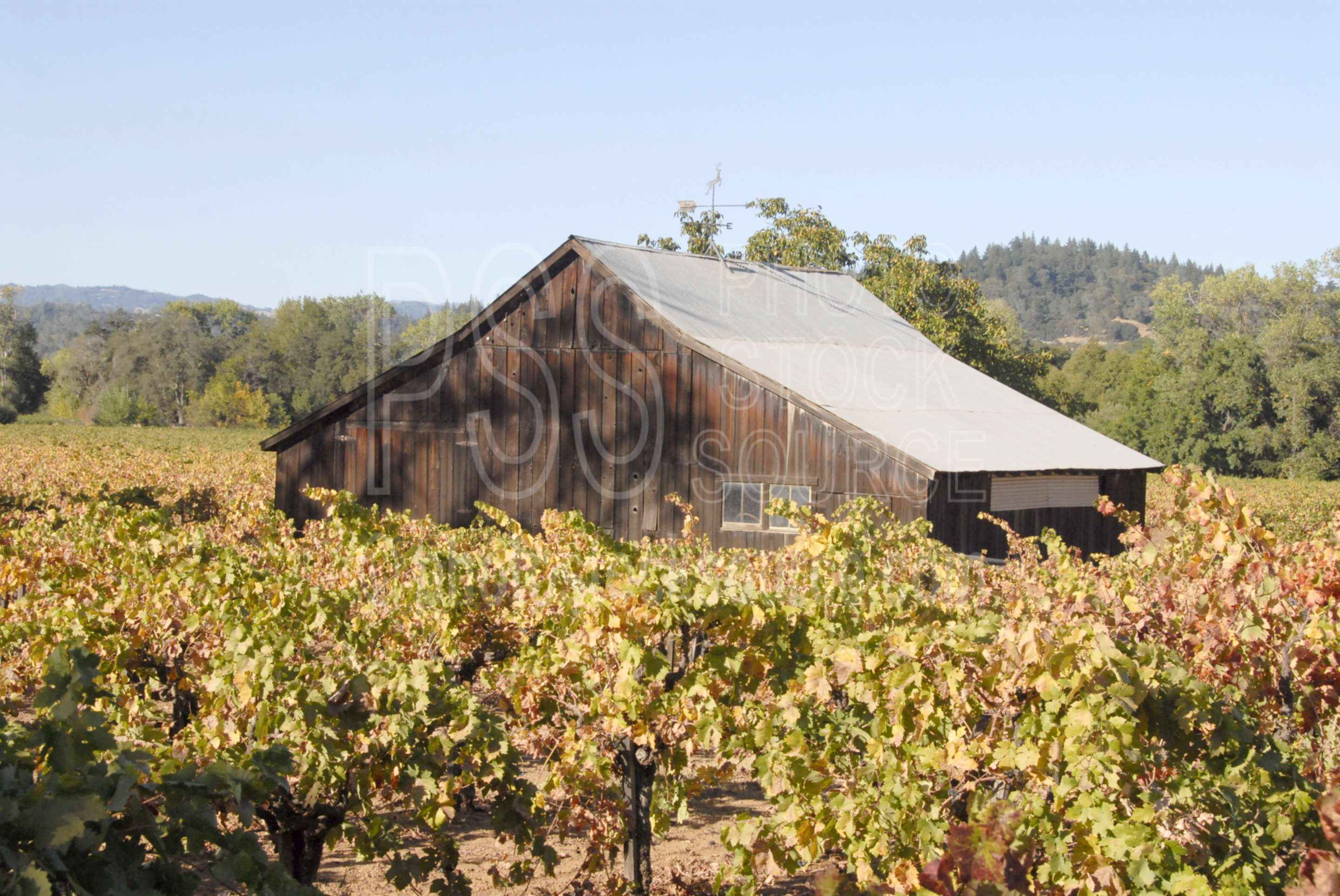 Winery Barn,wine,drinking,grape,agriculture,vineyard,winery,barn,barns