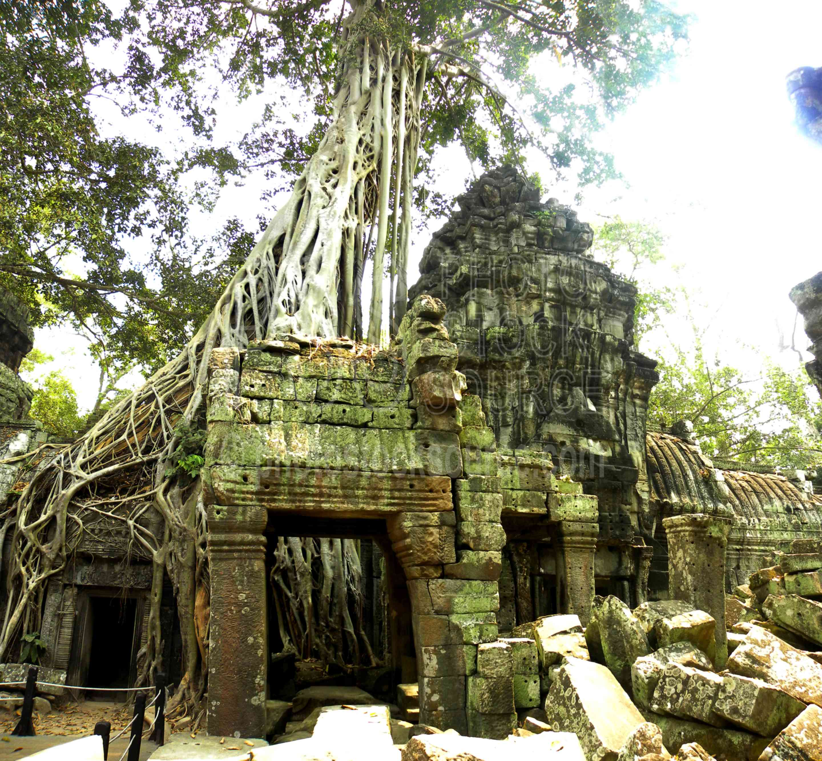Ta Prohm Tree Roots,ruin,ancient,historical,khmer,fig,strangler fig,ficus gibbosa,roots,tomb raider,tomb raider temple