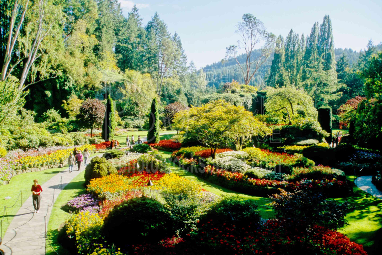 Sunken Garden,flower,plants