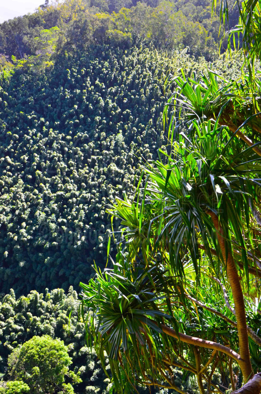25+ Waikamoi Ridge Trail PNG