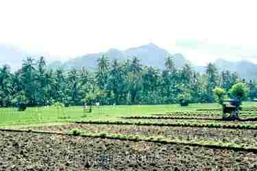 Photo of Plowed Fields