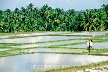 Photo of Rice Field Worker