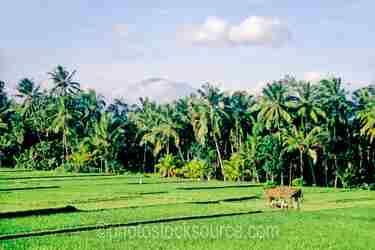 Photo of Gunung Batur