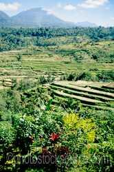 Photo of Rice Terraces