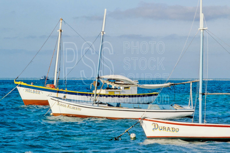 Boats in the Harbor,harbor,boats