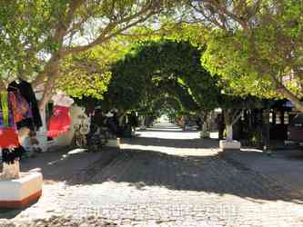 Tree Archway from Plaza