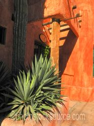 Cactus and Building