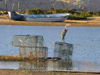 Scorpion Bay Lobster Traps