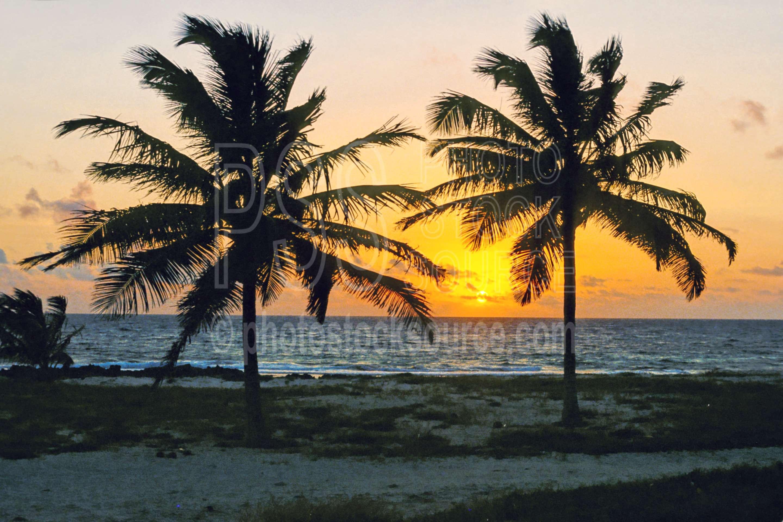 Palm Tree Sunset,palm,palmtree,sunset,tree,nature,seascapes,coast