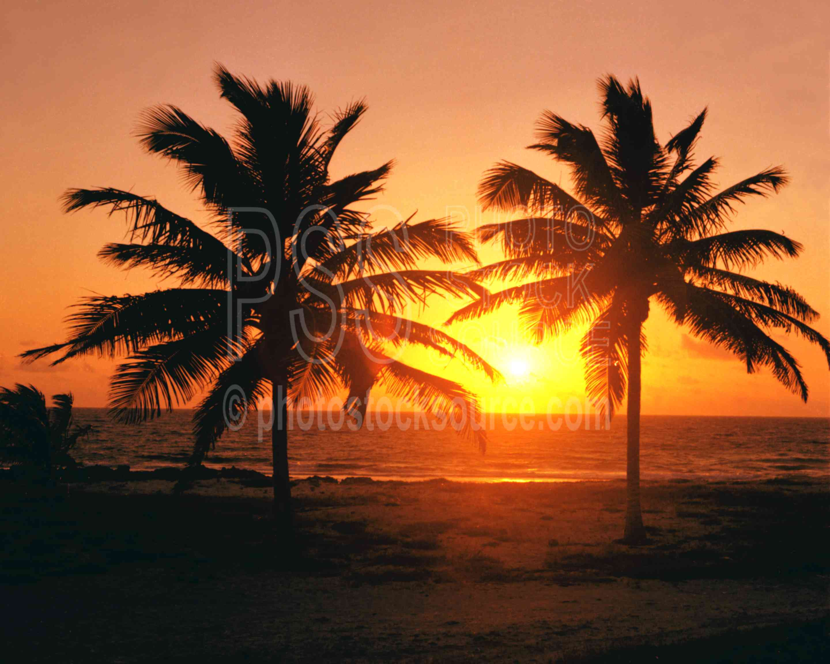 Palm Trees at Sunset,palm,palm tree,sunset,nature
