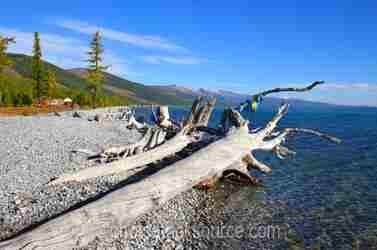 Lake Khovsgol Driftwood