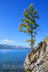 Tree on Lake Khovsgol
