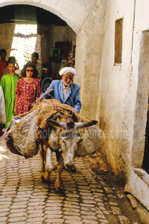Donkey in the Medina,alley,donkey,fezs,market,medina,street,morocco markets,animals