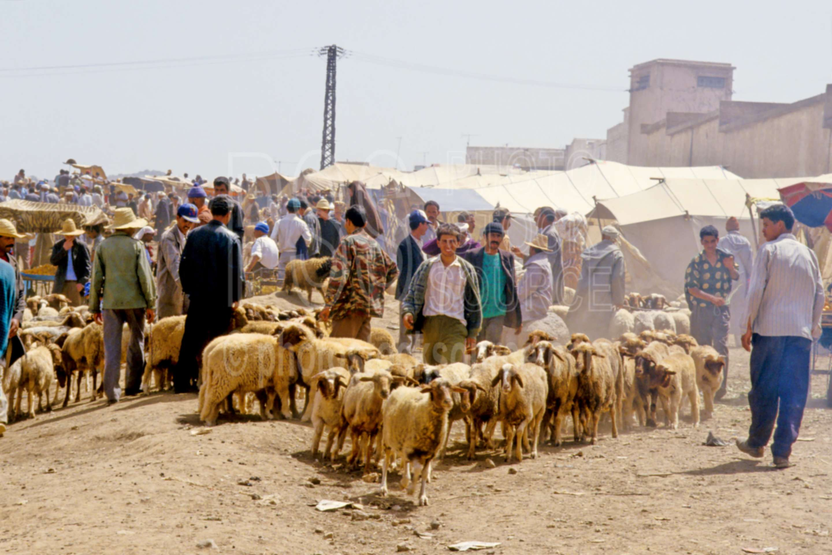Sheep Sellers,market,mens,people,sell,sheep,morocco markets,animals