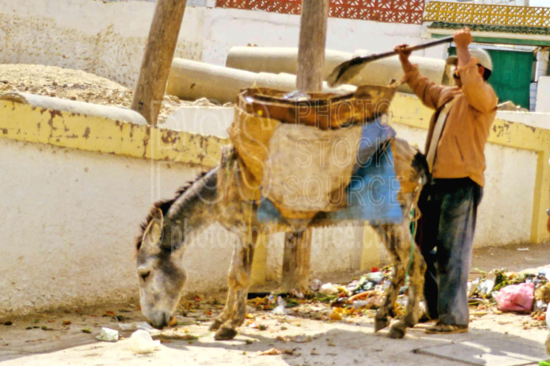 Garbage Collector,donkey,work,worker,animals