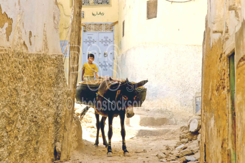 Working Donkey,alley,donkey,street,work,worker,animals
