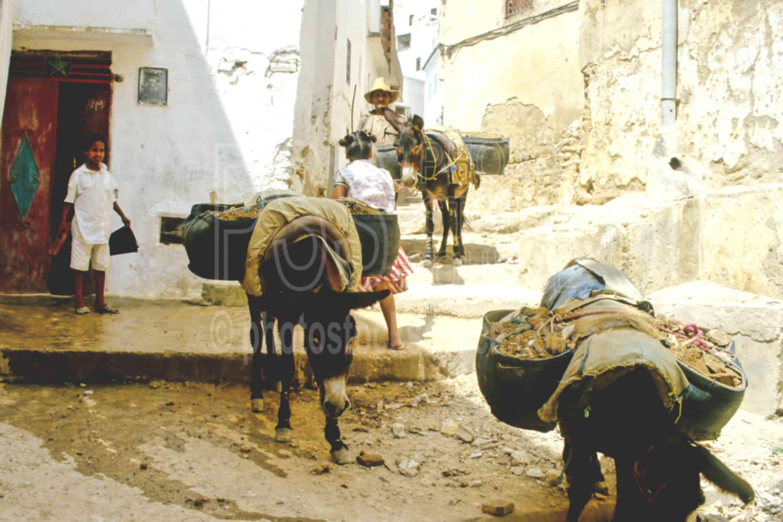 Donkeys Working,donkey,mans,work,worker,animals