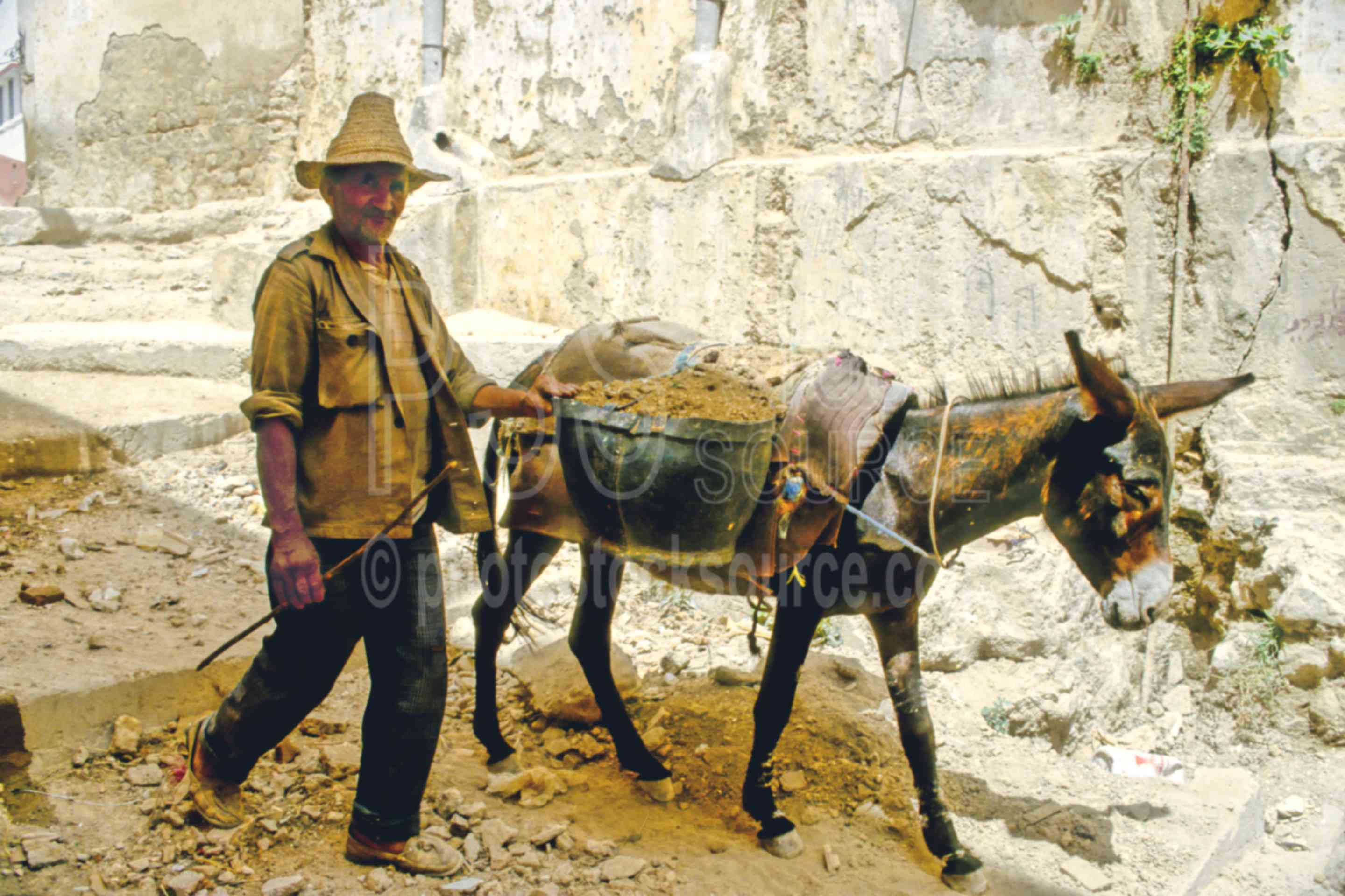 Working Pair,donkey,mans,work,worker,animals