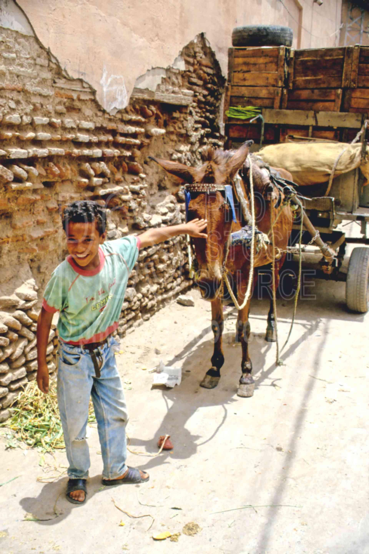 Boy and Donkey,boys,donkey,market,medina,morocco markets,animals,children