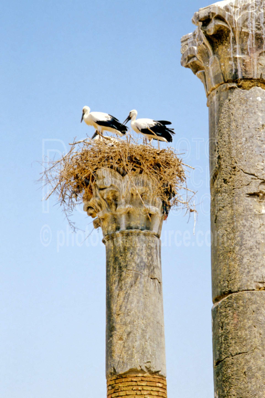 Storks in the Ruins,nest,stork