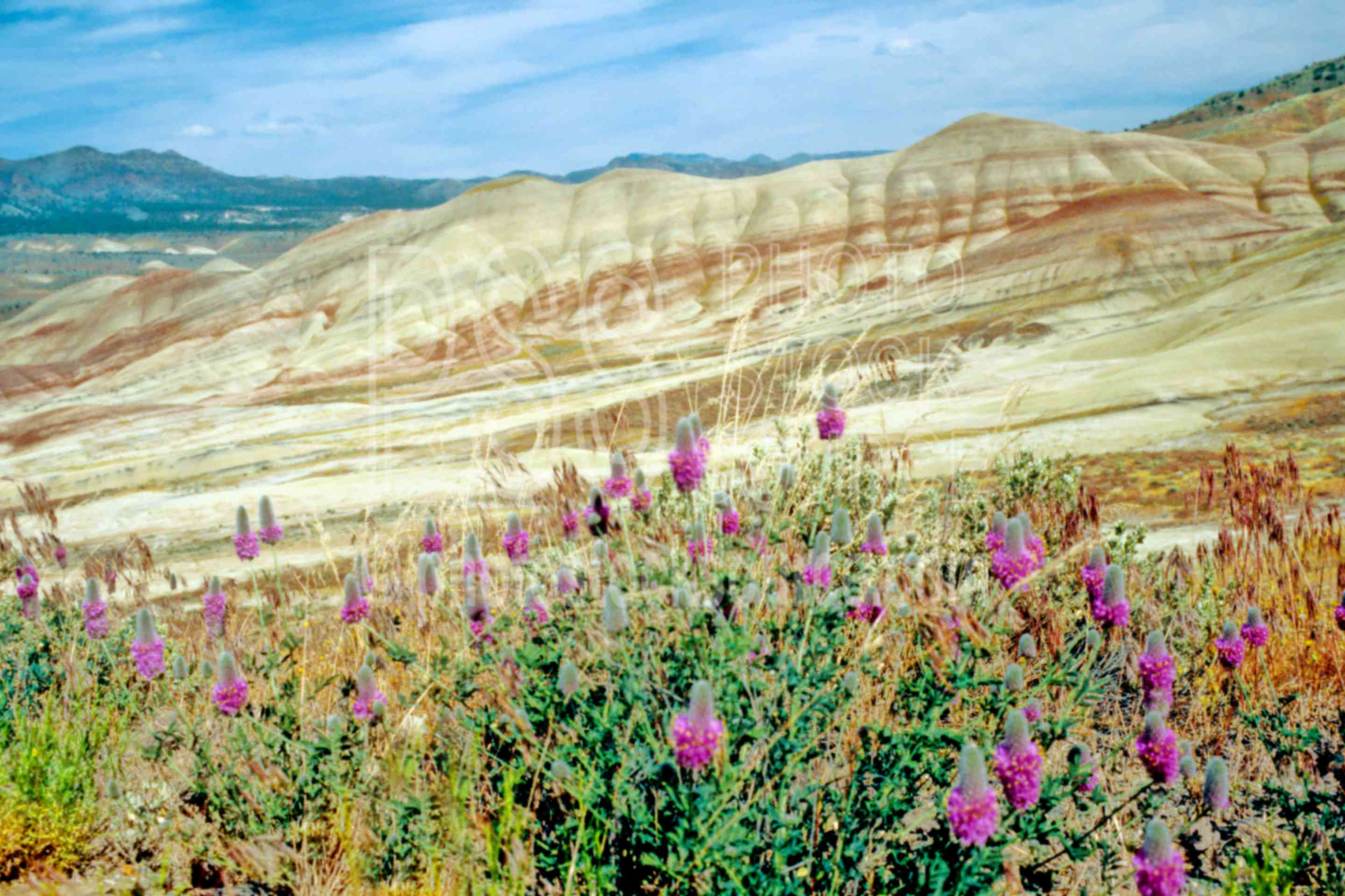 Painted Hills,john day fossil beds national monument,fossil bed,red clover,clover,usas