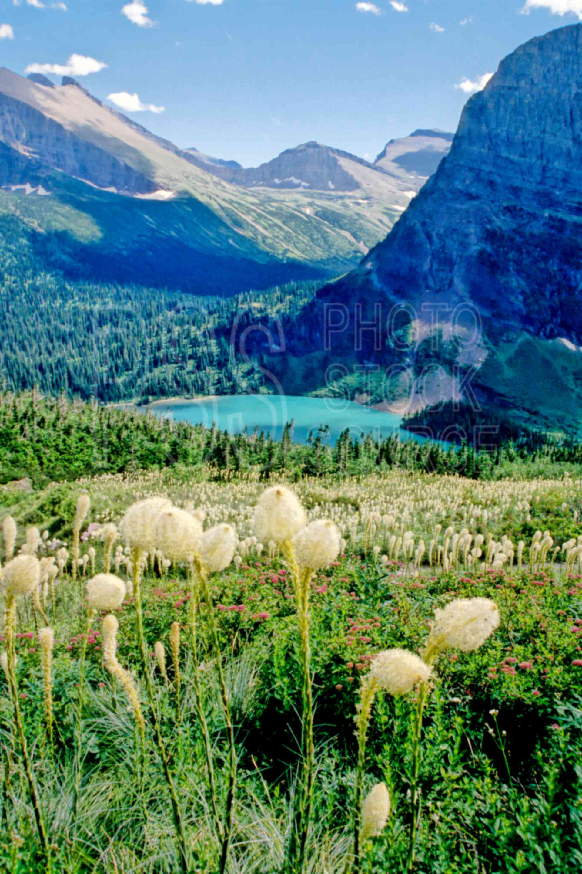 Photo Of Grinnel Lake Beargrass By Photo Stock Source Flower