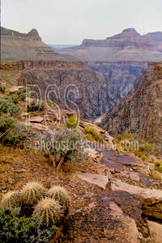 Cactus,plant,plateau point,desert,usas,national park,nature,national parks,plants