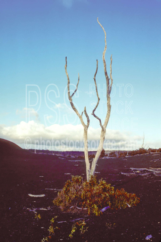 Dead Tree,kilauea crater,kilauea volcano,landform,usas,national park,nature,national parks