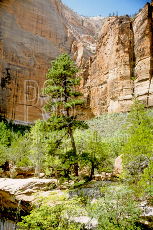 Below Emerald Pool,tree,usas,national park,nature,national parks