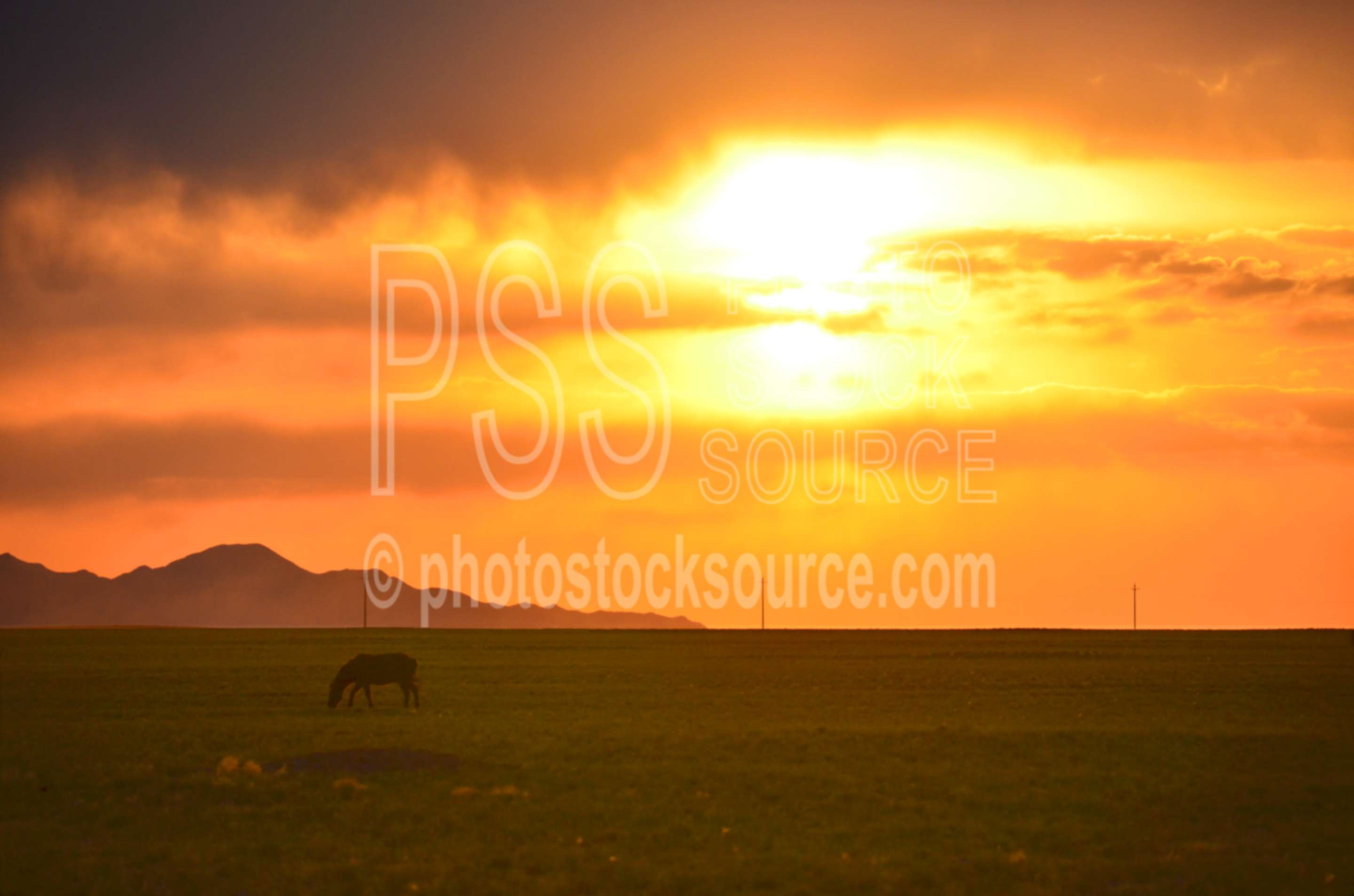Horse with Gobi Sunset,animals,sun,clouds,sunset,gobi,gurvan saikhan